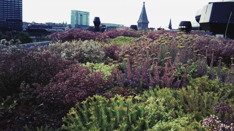 Grønne tage - smukt, energibesparende og miljøvenligt