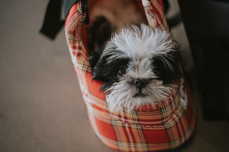 Transport og opbevaring med hundetaske