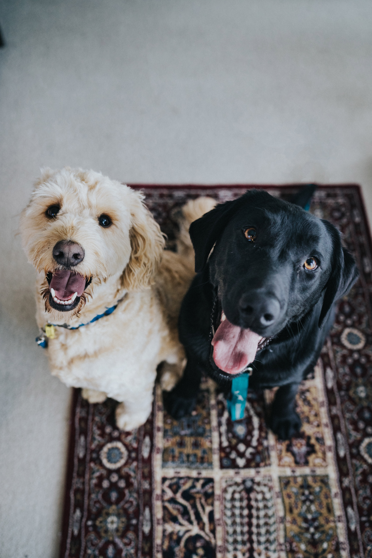 Har du de bedste godbidder til din hund?
