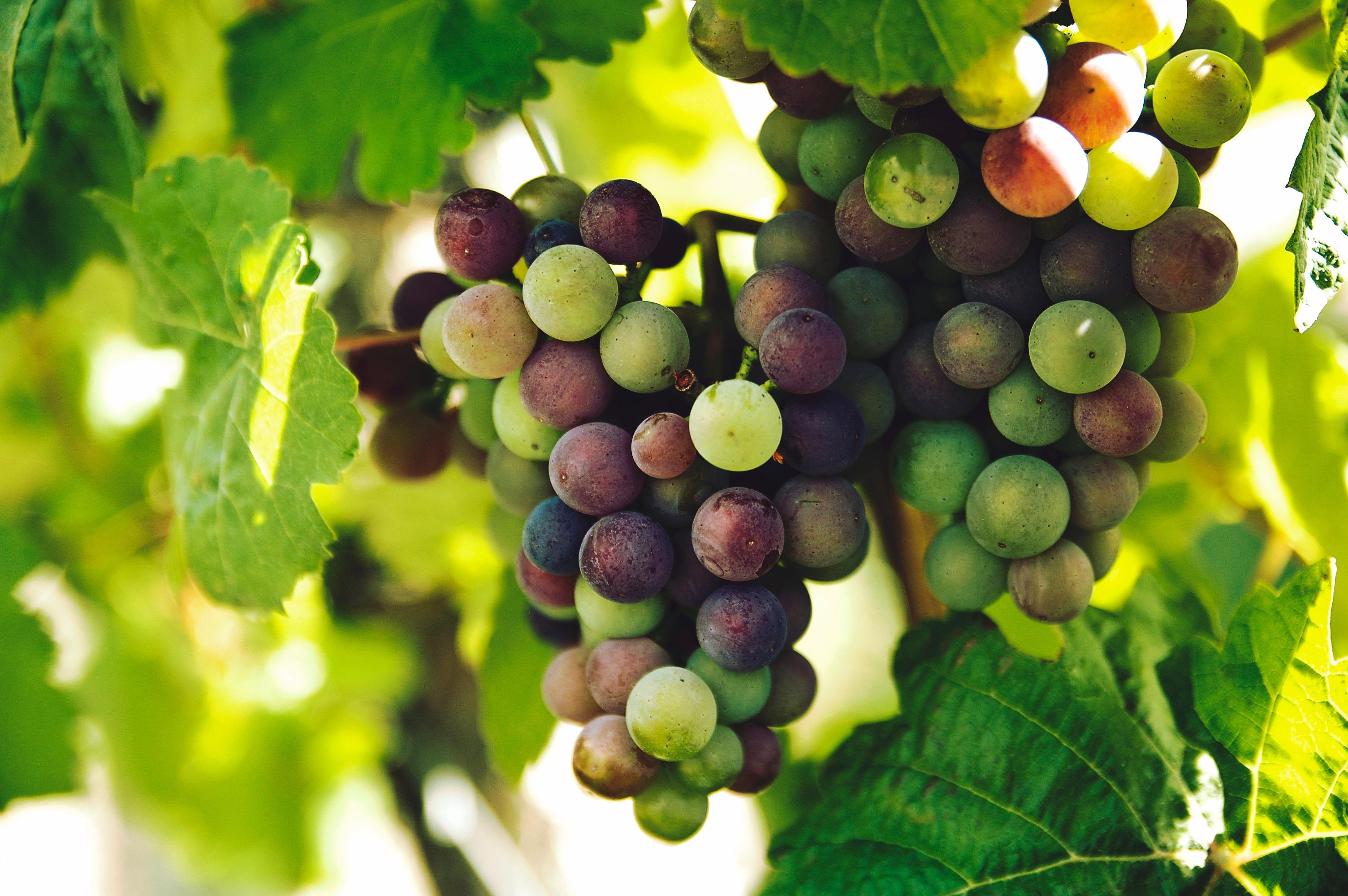 Hvad gør portvin så lækkert?